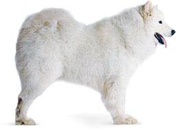 Диагностика и лечение животных