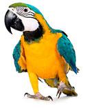 Профессиональное лечение попугаев