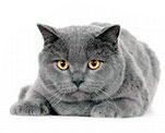Как проходят роды у кошки: подготовка, процесс и его этапы
