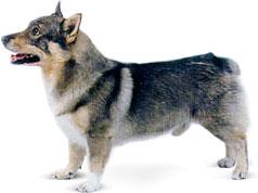 Усыпление собак (Эвтаназия)