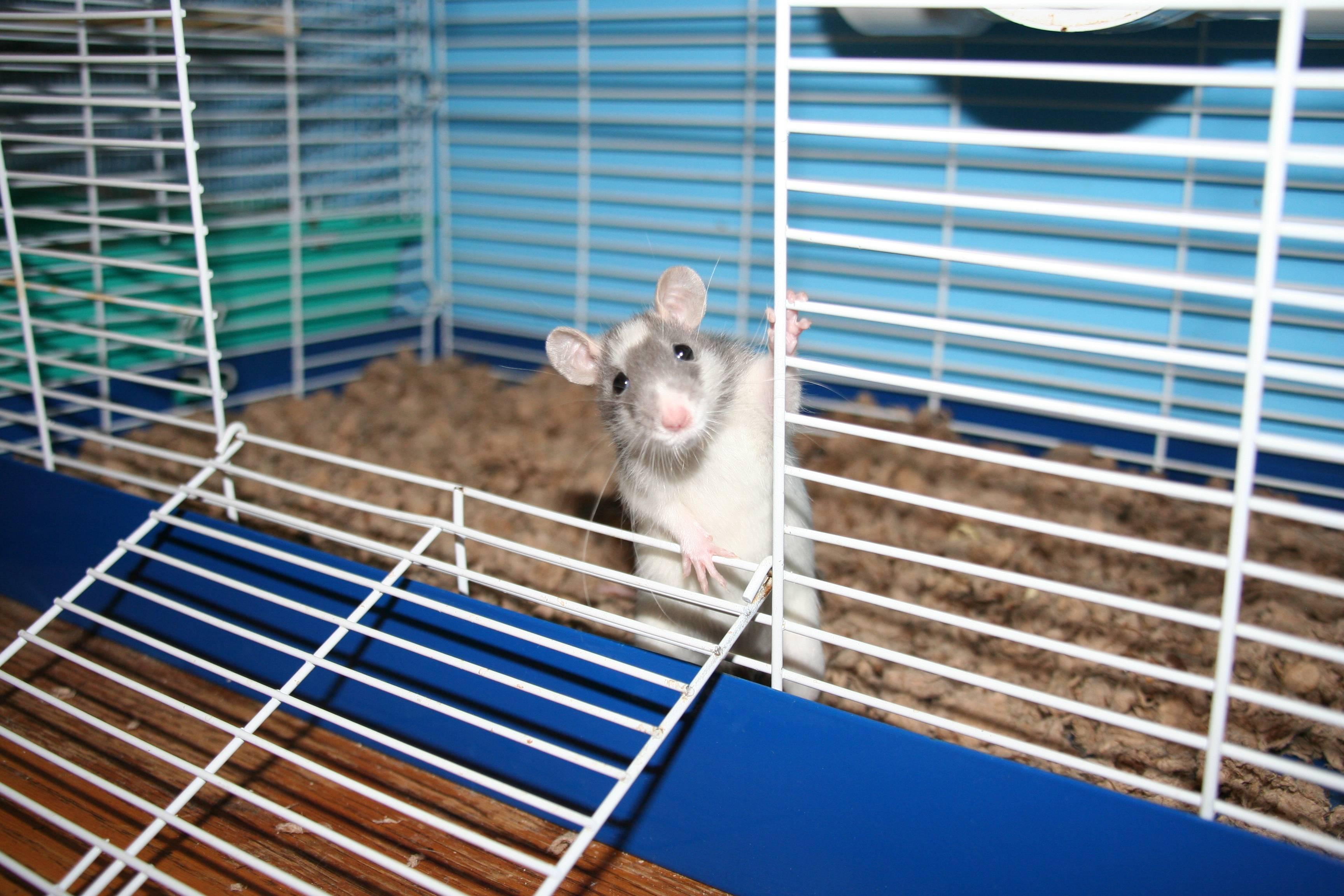 Как сделать домик для крысы 127